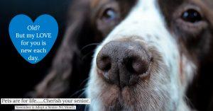 November is ADOPT A SENIOR PET month!!